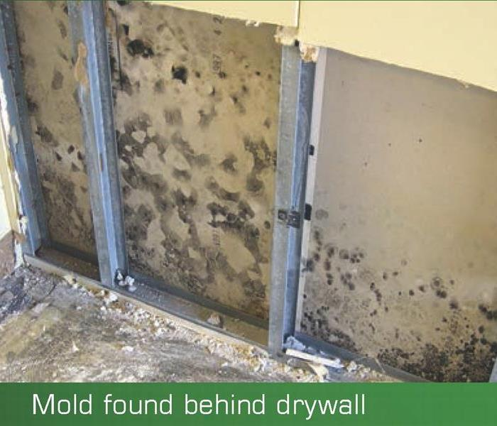 Mold Remediation The Mold Mitigation and Remediation Process